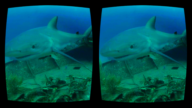 Discovery_VR_Sharks