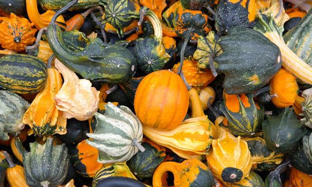 thanksgiving_pumpkins